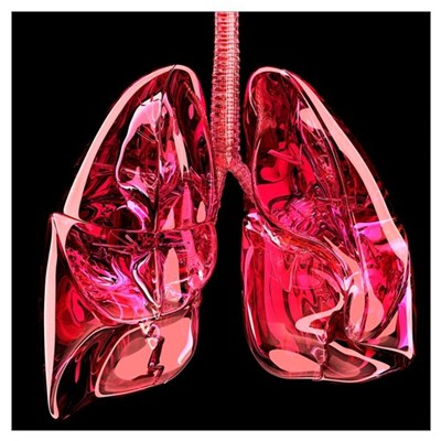 Lungs, artwork Poster