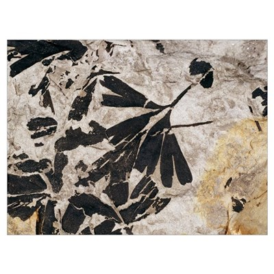 Ginkgo sp. fossil leaves Canvas Art
