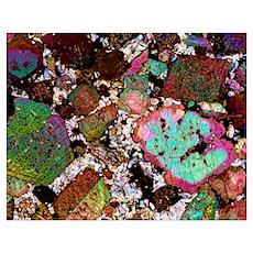 Leucitite mineral, light micrograph Poster