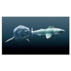 Dunkleosteus prehistoric fish, hunting Poster