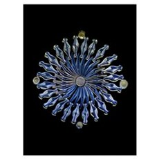 Diatoms, light micrograph Canvas Art