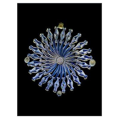 Diatoms, light micrograph Poster
