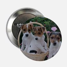 "Jack Russell 2.25"" Button (100 pack)"