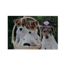 Jack Russell Rectangle Magnet (10 pack)