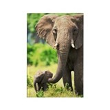 Elephants and elephant babies Single