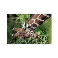 Reticulated Giraffe 2.jpg Rectangle Magnet
