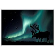 Aurora borealis and caribou
