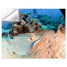 Blue-spotted stingray Wall Decal