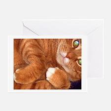 Petey Cat Greeting Cards (Pk of 10)