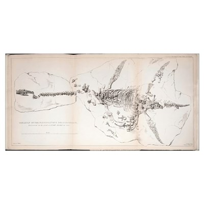 1823 First complete Plesiosaur fossil Poster