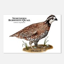 Northern Bobwhite Quail Postcards (Package of 8)