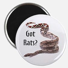 Snake Boa Got Rats Magnet