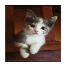 Tabby The Adorable Kitten Tile Coaster