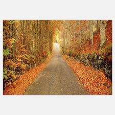 Autumn Road Scotland