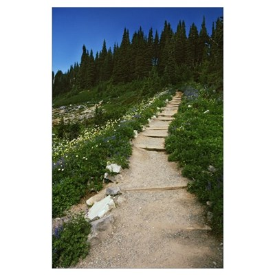Trail through blooming wildflower meadow, Paradise Poster