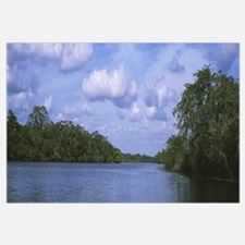Trees along a river, New River, Belize