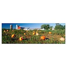 Michigan, Kent County, Pumpkin crop near silo Poster