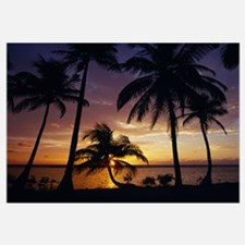 Silhouette of palm tree on the coast at sunrise, B