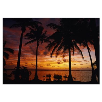 Silhouette of palm tree on the coast at sunrise, B Poster