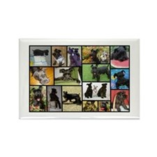 Black Schnauzer Collage Rectangle Magnet
