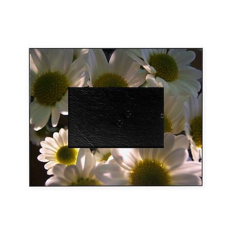 Illuminated Daisies Picture Frame