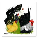 "Japanese Bantam Group Square Car Magnet 3"" x"