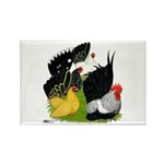Japanese Bantam Group Rectangle Magnet (100 pack)