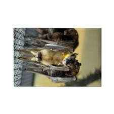 Straw-colored fruit bat 6.jpg Rectangle Magnet
