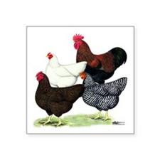 "Plymouth Rock Chickens Square Sticker 3"" x 3&"