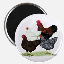"Plymouth Rock Chickens 2.25"" Magnet (10 pack)"