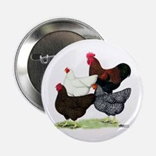 "Plymouth Rock Chickens 2.25"" Button"