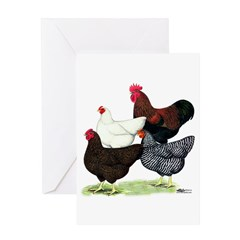 Plymouth Rock Chickens Greeting Card