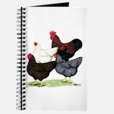 Plymouth Rock Chickens Journal