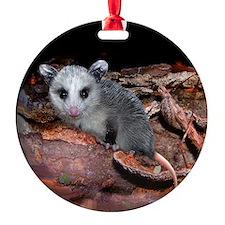 Opossum Ornament (Round)