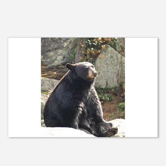 Black Bear Sitting Postcards (Package of 8)