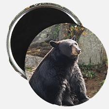 """Black Bear Sitting 2.25"""" Magnet (100 pack)"""