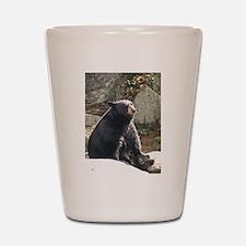 Black Bear Sitting Shot Glass