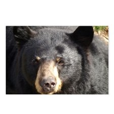 Black Bear Face Postcards (Package of 8)