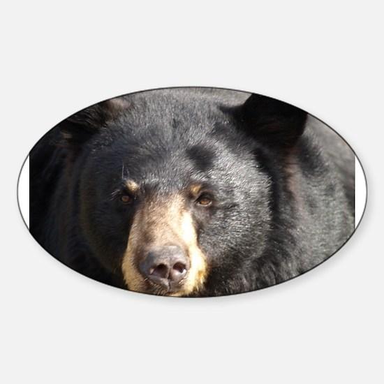 Black Bear Face Sticker (Oval)