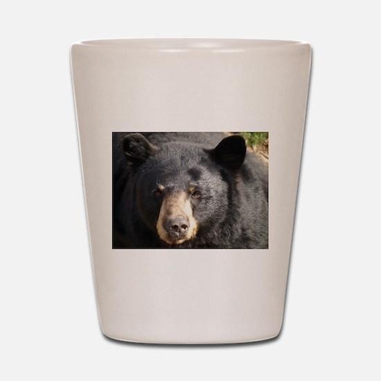 Black Bear Face Shot Glass