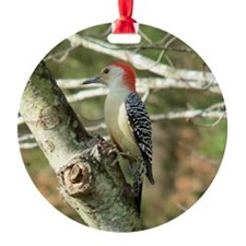 Red-bellied Woodpecker II Ornament (Round)