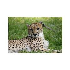 Cheetah 2.jpg Rectangle Magnet