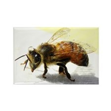 honeybee Rectangle Magnet