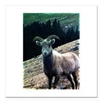 Mountain Sheep Square Car Magnet 3