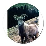 Mountain Sheep Round Car Magnet
