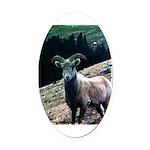 Mountain Sheep Oval Car Magnet