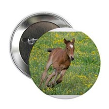 "Galloping Foal 2.25"" Button"