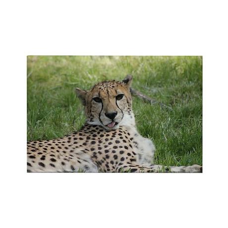 Cheetah 20.jpg Rectangle Magnet