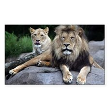 MALE AND FEMALE LIONS.jpg Decal