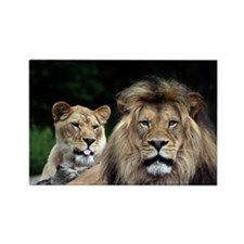 MALE AND FEMALE LIONS 3.jpg Rectangle Magnet